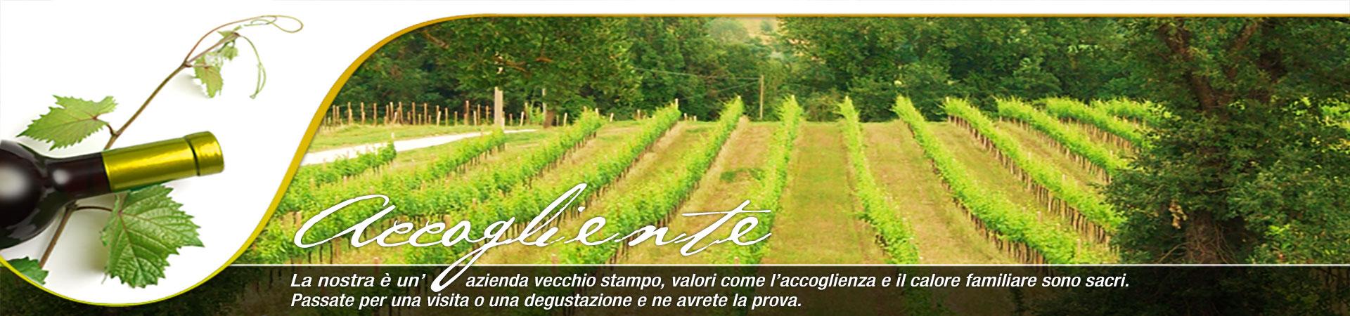 Cantina Zazzera – Vigne – Vini – Collevalenza – Todi (Perugia) (Umbria)